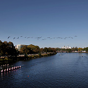 BOSTON, MASSACHUSETTS - OCTOBER 21: Crews in action as birds fly overhead during The 53rd Head of the Charles Regatta on the Charles River which separates Boston and Cambridge, Massachusetts, USA. The Head of Charles, which began in 1965, attracts over 11,000 athletes from around the globe. The course is 3 miles (4,800 meters) long and stretches from the start at Boston University's DeWolfe Boathouse near the Charles River Basin, passing Harvard University to the finish just after the Eliot Bridge. Boston, Massachusetts. 21st October 2017. (Photo by Tim Clayton/Corbis via Getty Images)