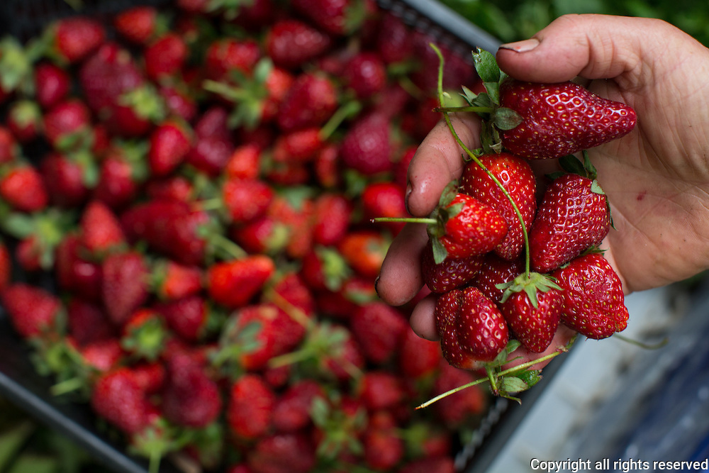 Strawberries at Tire Tuesday market
