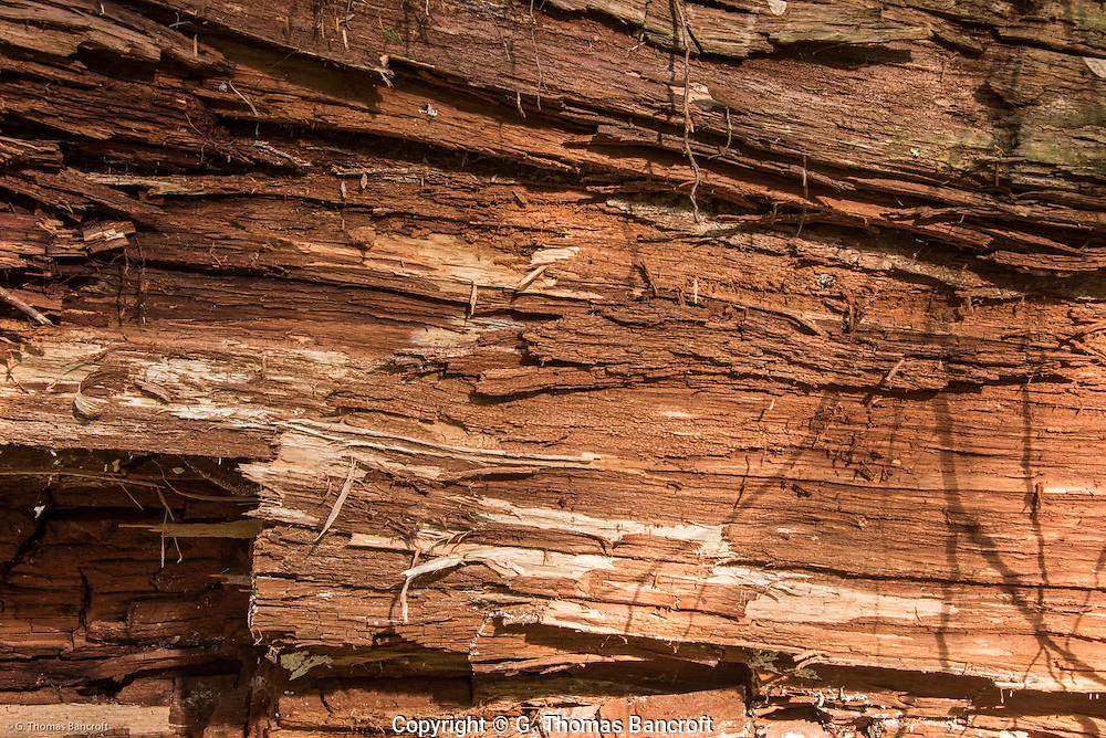 Red cedar log.