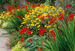 The hot border at West Dean garden, Chichester with Crocosmia 'Lucifer'. Design: Jim Buckland and Sarah Wain