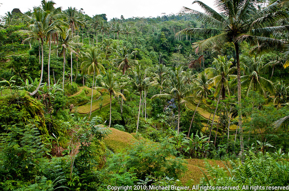 Balinese jungle landscape on the way to Gunung Kawi in Gianyar Regency, Bali, Indonesia