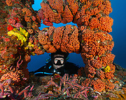"Scuba diver on the shipwreck ""Duane"", Key Largo, Florida"