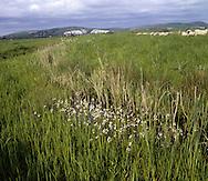 Lewes Brooks/Water Violet<br /> LOWLAND WETLAND/ COASTAL MARSH