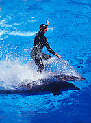 Image of a man swimming with the dolphins at Busch Gardens Tampa Bay, Tampa, Florida, American Southeast