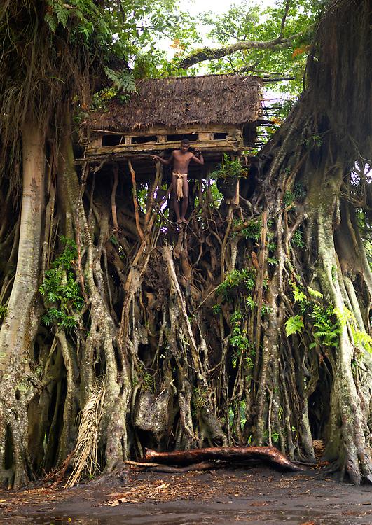 Vanuatu, Tafea Province, Tanna Island, circumcision house in a giant tree