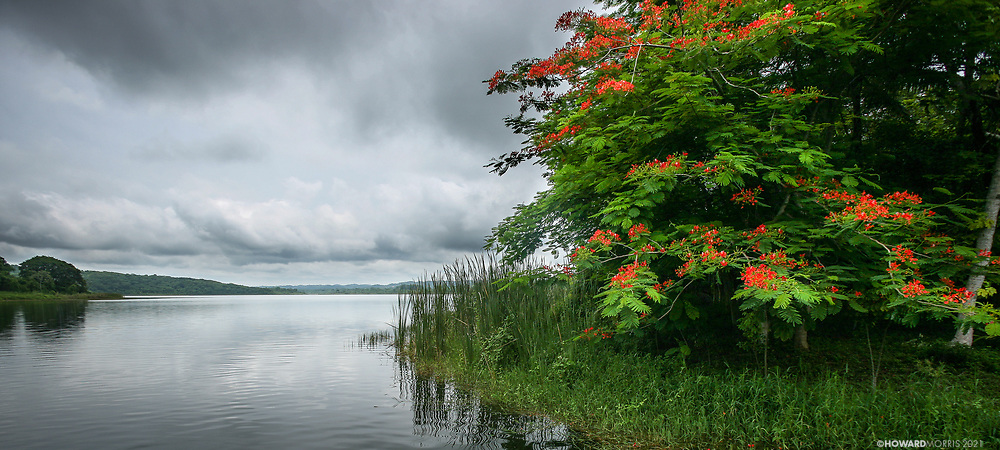 Flowering trees along Lago Peter Itza.