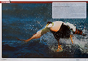 Waterfowl & Retriever, 2011