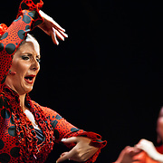 Flamenco show in Madrid (Spain)