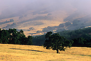 Coastal fog and hills, Carmel Valley, Monterey County, California