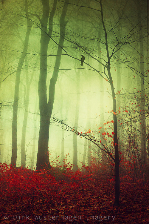 Dreamy fantastic forest scenery - textured and tinted photograph<br />
