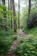 Trail in the woods, Great Smoky Mountain National Park