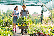 Gardeners discussing while pushing plants in wheelbarrow at greenhouse