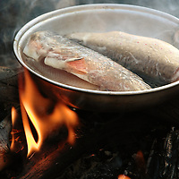 Trout being cooked on a campfire.