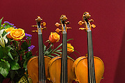 Instruments from the Brobst Violin Shop in Alexandria, Virginia.