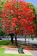 Flowering Trees and bench in park - Brisbane, Australia <br />