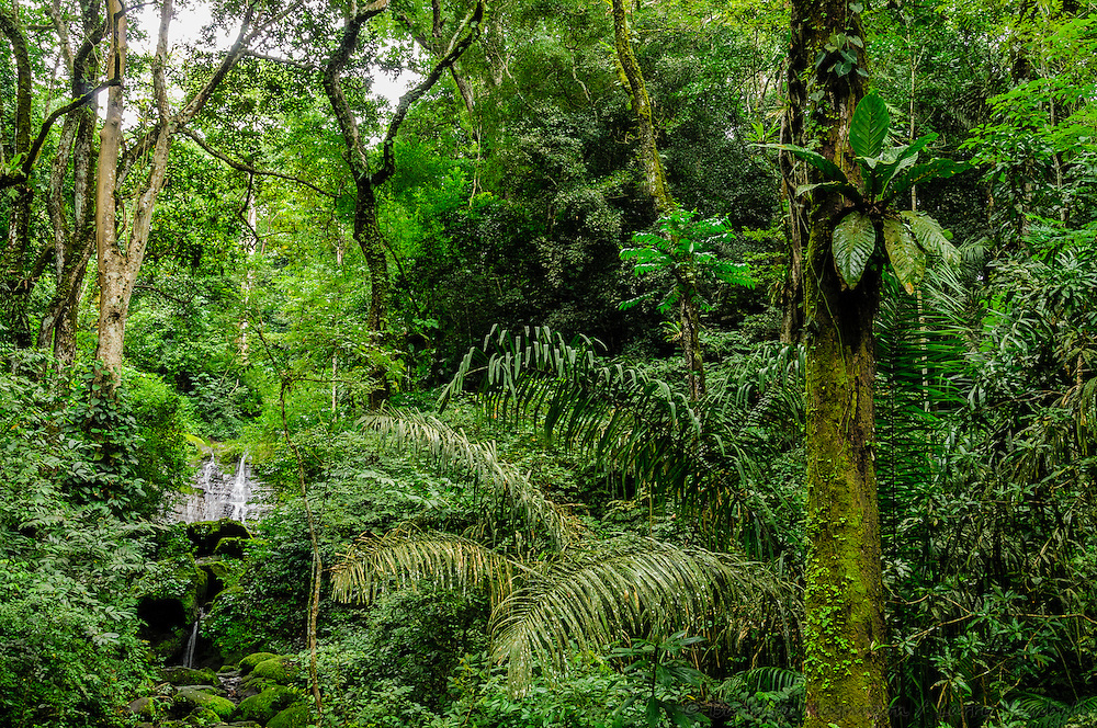 Waterfall in rainforest; Soberania National Park, Panama