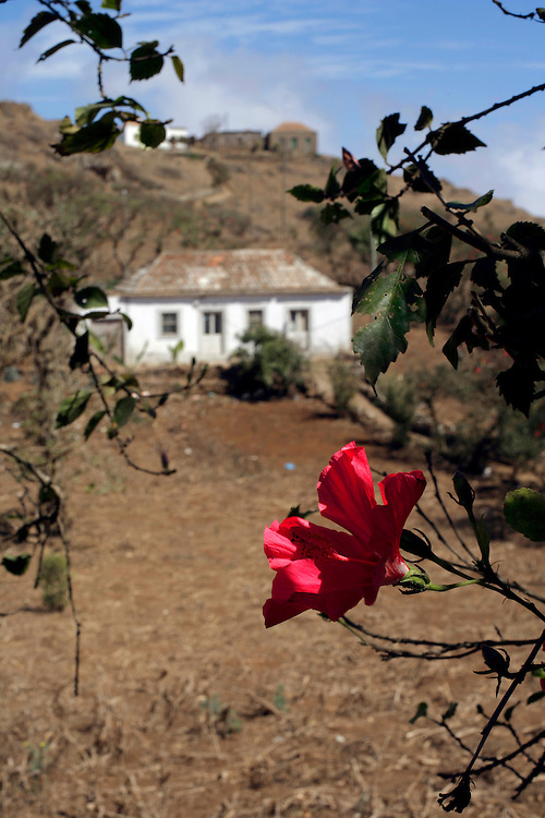 """A bougainvillaea tree marks the fence of a little farm in Brava island. With a mild climate, the smaller of Cape Verde islands has the nickname of """"flower island""""."""