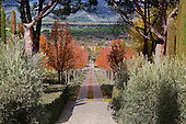 Mediterranean Garden 781