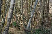 tree trunks in dense forest