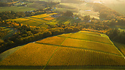 Brilliant golden autumn hues at Cristom Estate vineyard, Eola-Amity Hills AVA, Willamette Valley, Oregon