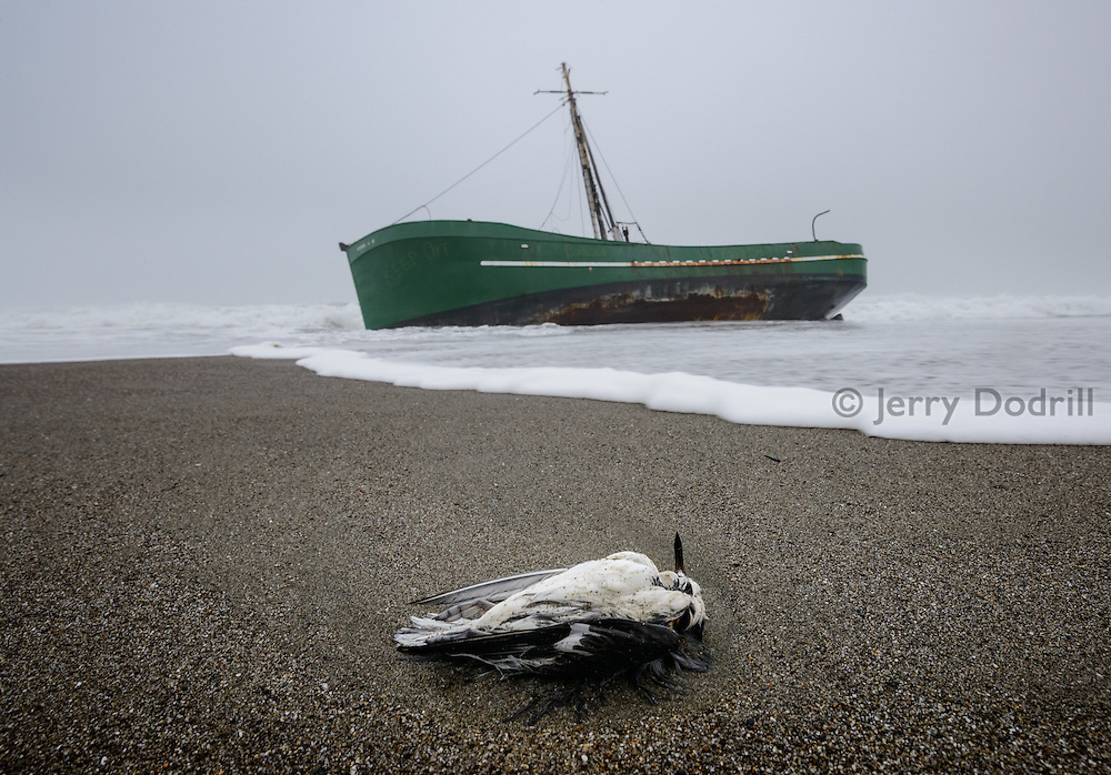 Shorebird and fishing boat Verna A II washed up on Salmon Creek Beach, Sonoma Coast, California