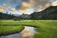 Evening clouds reflected in waters of State Creek, Washington Pass meadows, North Cascades