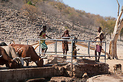 Himba men pump water from a well for their cattle. The Himba are a pastoral and nomadic people of northern Namibia. They tend herds of goats and cattle in the arid desert environment, living in extended families in homesteads. Both men and women go topless. Photographed in Namibia, Southern Africa.