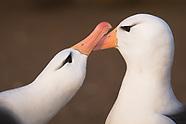 ALBATROSS: BIRDS OF LEGEND