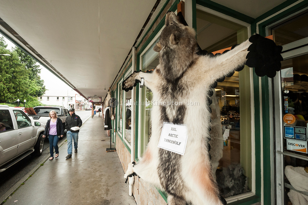 A arctic timber wolf hide for sale on the main street of Sitka, Alaska.