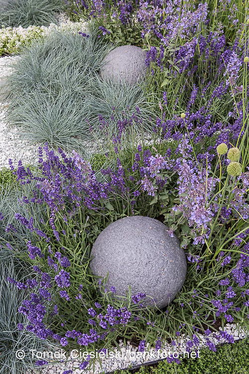 Stony ball between perennials and ornamental grass