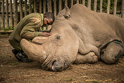 A wildlife ranger comforts Sudan, the last living male Northern White Rhino left on the planet, moments before he passed away March 19, 2018 at Ol Pejeta Wildlife Conservancy in northern Kenya. Sudan lived a long, healthy life at the conservancy after he was brought to Kenya from Dvur Kralov zoo in the  Czech Republic in 2009. He died surrounded by people who loved him at  after suffering from age-related complications that led to degenerative changes in muscles and bones combined with extensive skin wounds. Sudan has been an inspirational figure for many across the world. Thousands have trooped to Ol Pejeta to see him and he has helped raise awareness for rhino conservation. The two female northern white rhinos left on the planet are his direct descendants. Research into new Assisted Reproductive Techniques for large mammals is underway due to him. The impact that this special animal has had on conservation is simply incredible. And there is still hope in the future that the subspecies might be restored through IVF. <br /> In 2009, I had the privilege of following this gentle hulking creature on his journey from the snowy Dvur Krulov zoo in the Czech Republic to the warm plains of Kenya, when he was transported with three of his fellow Northern White Rhinos in a last ditch effort to save the subspecies. It was believed that the air, water, and food, not to mention room to roam, might stimulate them to breed&mdash;and the offspring would then be used to repopulate Africa. At the time, there were 8 Northern white rhinos alive, all in zoos. Today, we are witnessing the extinction of a species that had survived for millions of years but could not survive mankind. (Photo by Ami Vitale)