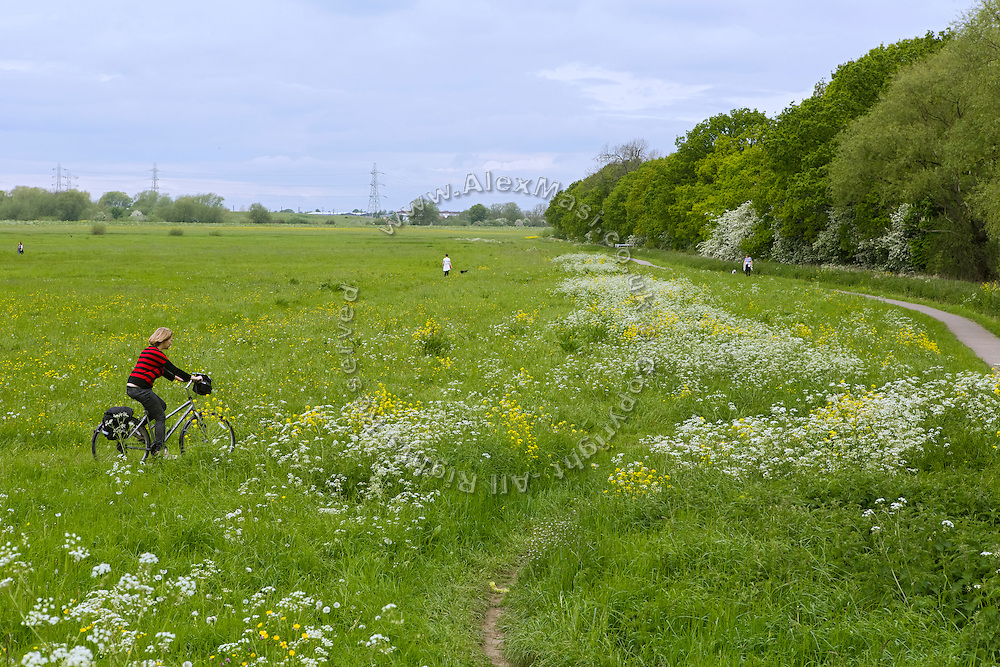 A tourist is cycling in the countryside near York, Yorkshire, England, United Kingdom.