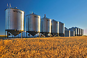 Grain bins and wheat<br /> near Swift Current<br /> Saskatchewan<br /> Canada