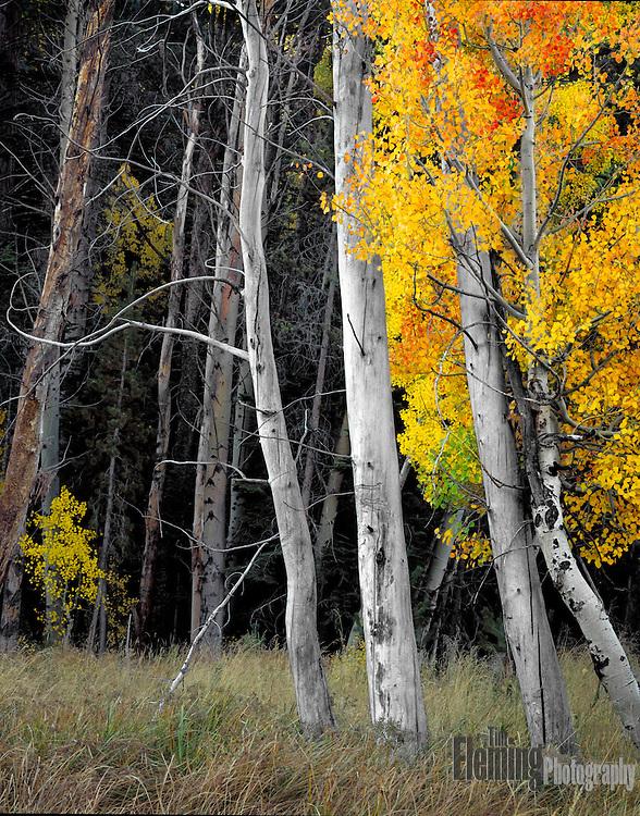Near Lee Vining creek in the Eastern Sierras