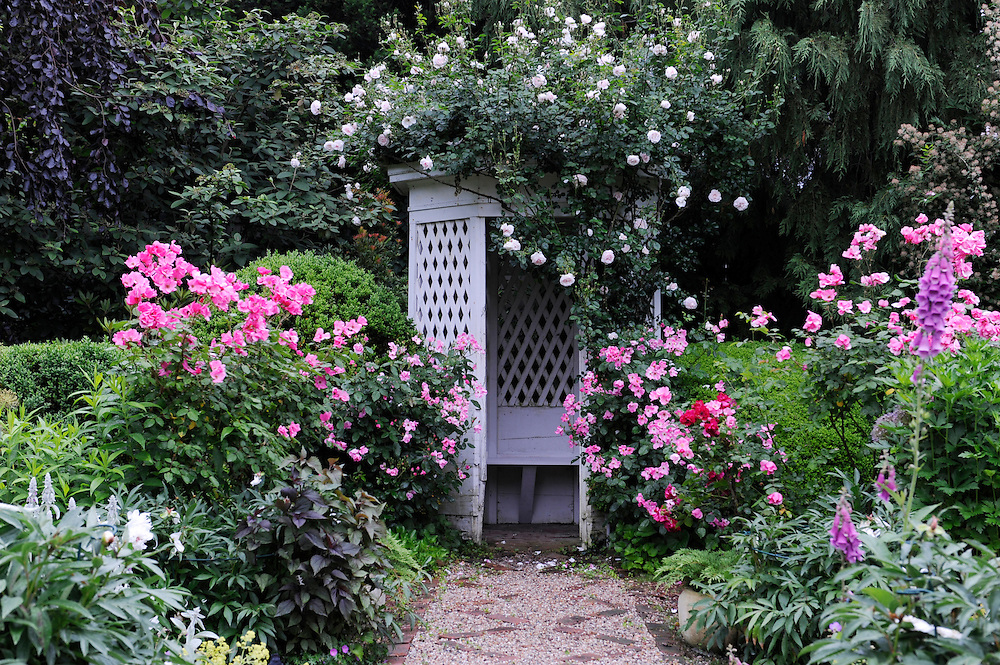 Perennial Garden with rose trellis