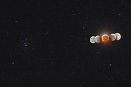 The Moon in total eclipse, on January 20, 2019, in a multiple exposure composite showing the Moon moving from right to left (west to east) through the Earth&rsquo;s umbral shadow. <br /> <br /> The middle image is from just after mid-totality at about 10:21 pm MST, while the partial eclipse shadow ingress image set is from 9:15 pm and the partial eclipse shadow egress image set is from 11:15 pm. <br /> <br /> I added in two images at either end taken at the very start and end of the umbral eclipse to add a more complete sequence of the lunar motion. However, on those images the lunar disk is darkened mostly by the penumbra.<br /> <br /> All images are with the Canon 6D MkII on a Fornax Lightrack II tracking mount to follow the stars at the sidereal rate, to keep the stars fixed and let the Moon drift from right to left against the background stars. <br /> <br /> Thus, the Moon images are where they were in relation to the background stars and therefore show the Moon&rsquo;s motion through the umbral shadow, with the shadow edge on the partially eclipsed Moons defining the shape of the large and circular umbral shadow of the Earth, approximately three times bigger than the Moon. At this eclipse the Moon moved across the north edge of the umbral so we are seeing the top of the shadow circle drawn here in the sky. <br /> <br /> At this eclipse the Moon was also shining beside the Beehive star cluster, Messier 44, in Cancer. This was the unique sight at this eclipse as it can happen only during total lunar eclipses that occur in late January. There was one on January 31, 2018 but the next will not be until 2037. <br /> <br /> The central image of totality includes a 1-minute exposure at ISO 800 and f/2.8 for the stars, which inevitably overexposes the Moon. So I&rsquo;ve blended in three shorter exposures for the Moon, taken immediately after the long &ldquo;star&rdquo; exposure. These were 8, 4 and 2 seconds at ISO 400 and f/4, and all with the Canon 200mm telephoto.<b