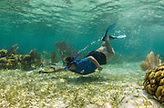 Vanessa Figueroa monitoring<br /> Nurse Shark (Ginglymostoma cirratum)<br /> Shark Ray Alley<br /> Hol Chan Marine Reserve<br /> near Ambergris Caye and Caye Caulker<br /> Belize<br /> Central America