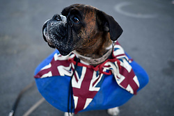 A dog wearing a Union flag collar in Windsor ahead of the wedding of Prince Harry and Meghan Markle.