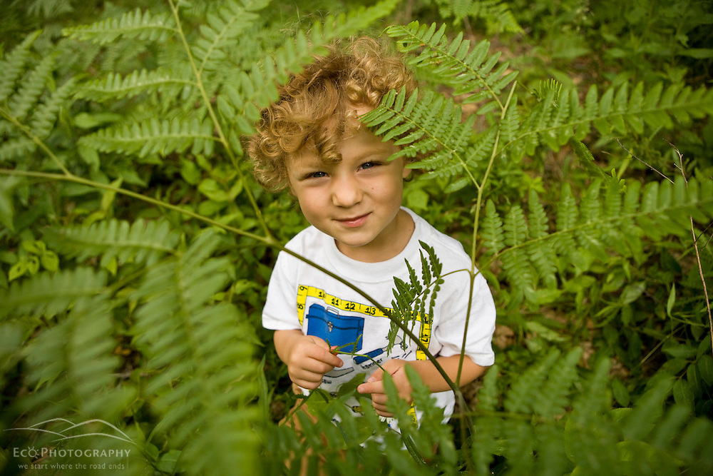 A young boy (age 4) plays among ferns in a forest in Turner, Maine. (MR)