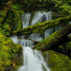 Olympic National Park, Washington, US