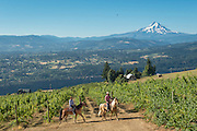 Celilo Vineyards, Columbia Gorge AVA, Washington