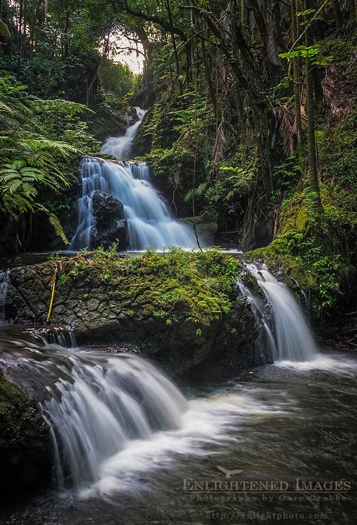 Stream at the Hawaii Tropical Botanical Garden, near Onomea, South Hilo Disrtict, The Big Island of Hawai'i, Hawaii