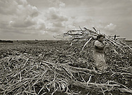 "Consuelo, Dominican Republic- A Haitian sugarcane worker gathers cane in the fields near the village of Consuelo, Dominican Republic.  A U.S. Department of Labor report issued 27 Sept 13 ""finds evidence of apparent and potential violations of labor law in the Dominican sugar sector, concerning: (1) acceptable conditions of work with respect to minimum wages, hours of work, and occupational safety and health, such as payments below the minimum wage, 12-hour work days, seven-day work weeks, lack of potable water, and the absence of safety equipment; (2) a minimum age for the employment of children and the prohibition and elimination of the worst forms of child labor; and (3) a prohibition on the use of any form of forced or compulsory labor."" (Photo by Robert Falcetti)"
