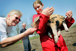UK ENGLAND WILTSHIRE CHITTERNE 15APR07 - Emma Chianchi (14) holds a Oxford Sandy Black piglet as Ann Tritt (60) fondles it at the Paradise Pig Farm run by Tony York and Carron McCann. Under the 'Pig Perfect' banner the two run a joint farm specialising in rare breeds and offer courses on pig keeping...jre/Photo by Jiri Rezac..© Jiri Rezac 2007..Contact: +44 (0) 7050 110 417.Mobile:  +44 (0) 7801 337 683.Office:  +44 (0) 20 8968 9635..Email:   jiri@jirirezac.com.Web:    www.jirirezac.com..© All images Jiri Rezac 2007 - All rights reserved.
