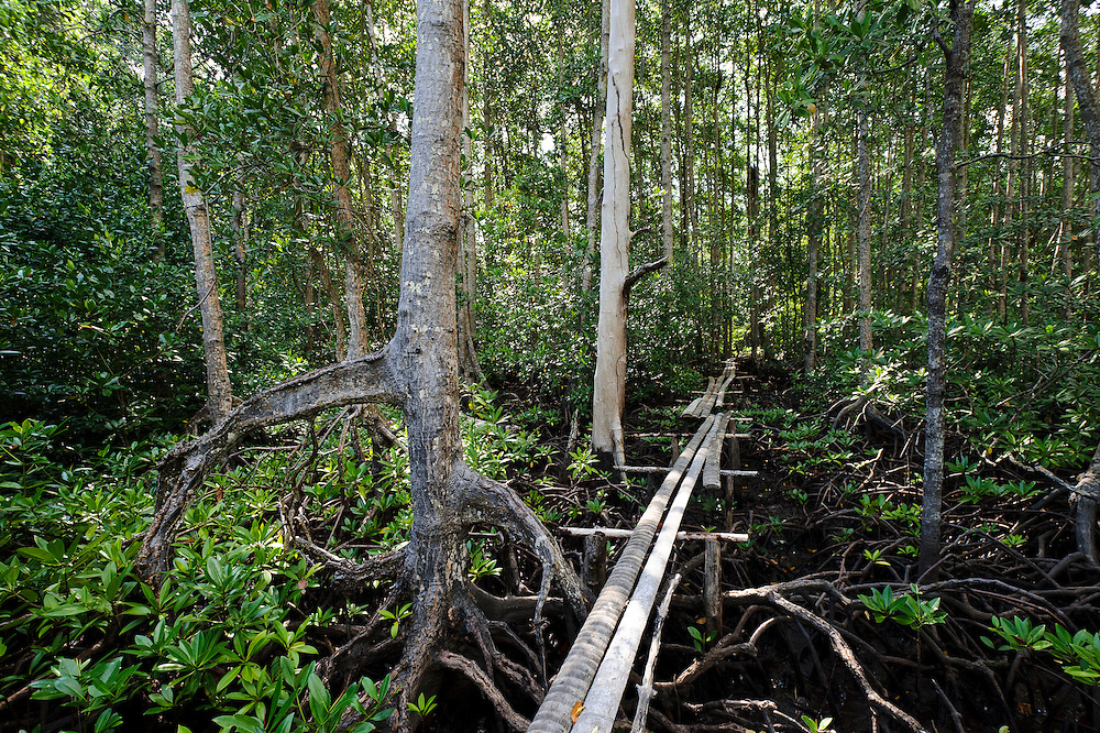 Boardwalk built through a mangrove area as part of a village-led ecotourism business, Sausu Peore, Central Sulawesi, Sulawesi, Indonesia.