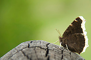 The beating of the wings of a butterfly can cause a hurricane in another part of the world