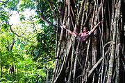 Man doing yoga high in a banyan tree, Viti Levu, Fiji