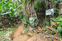 Trail through coastal forest at Mpenjati Nature Reserve. Southern KwaZulu Natal. South Africa