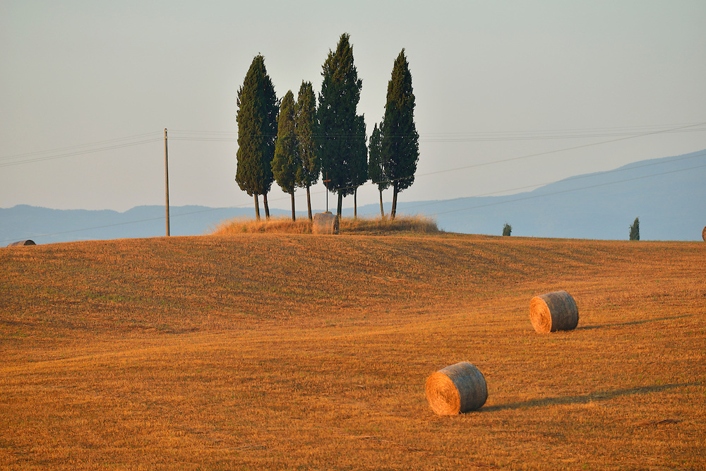 Cluster of trees and hay fields at first light, Tuscany, Siena Province, Italy, Europe