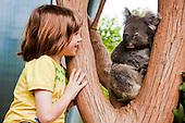 Arnaud au pays des koalas